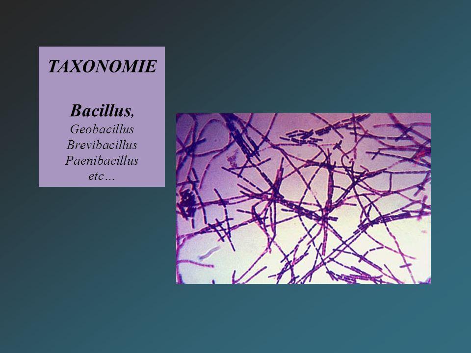 TAXONOMIE Bacillus, Geobacillus Brevibacillus Paenibacillus etc…