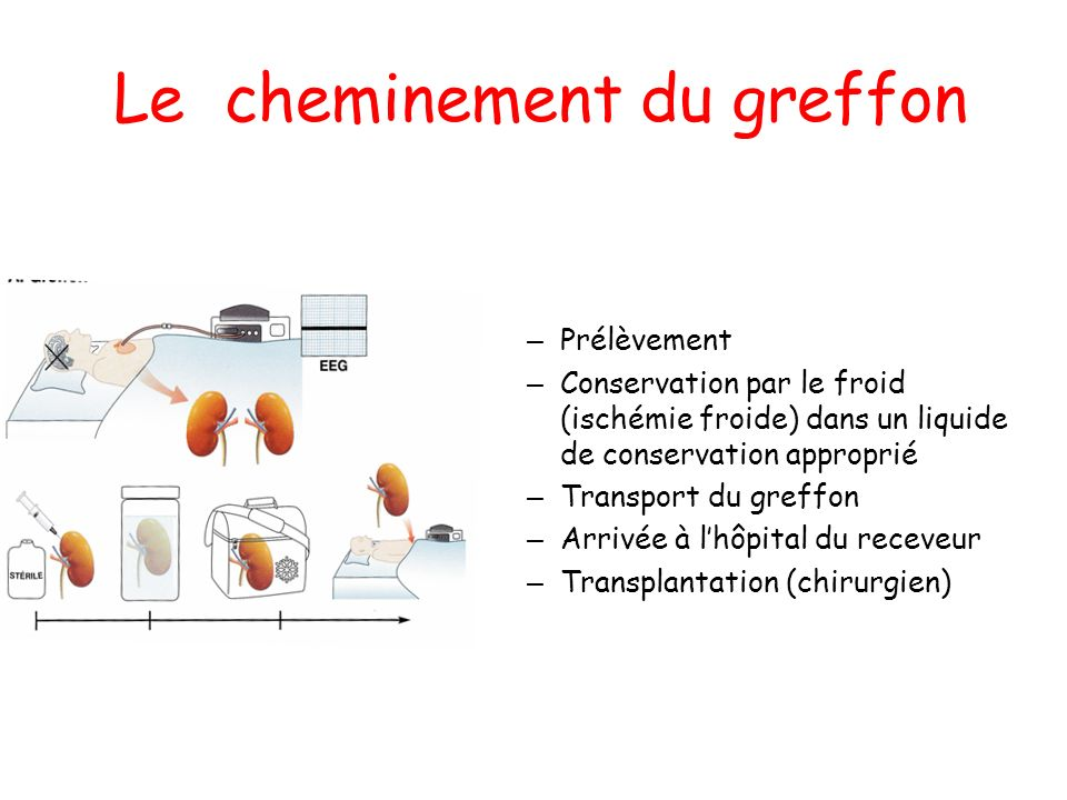 Le cheminement du greffon