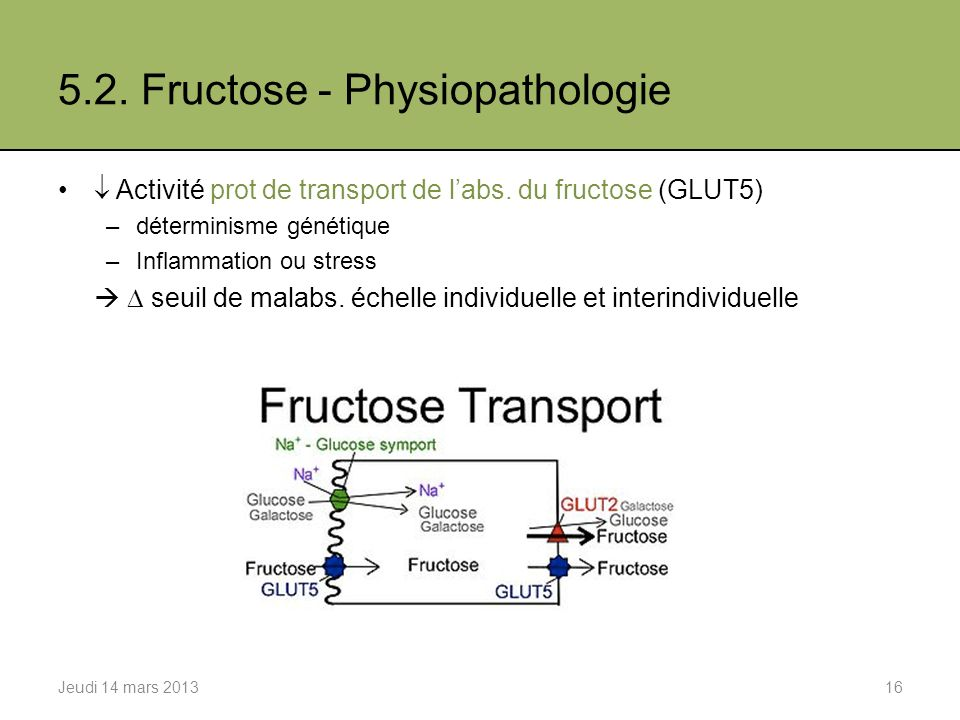 5.2. Fructose - Physiopathologie
