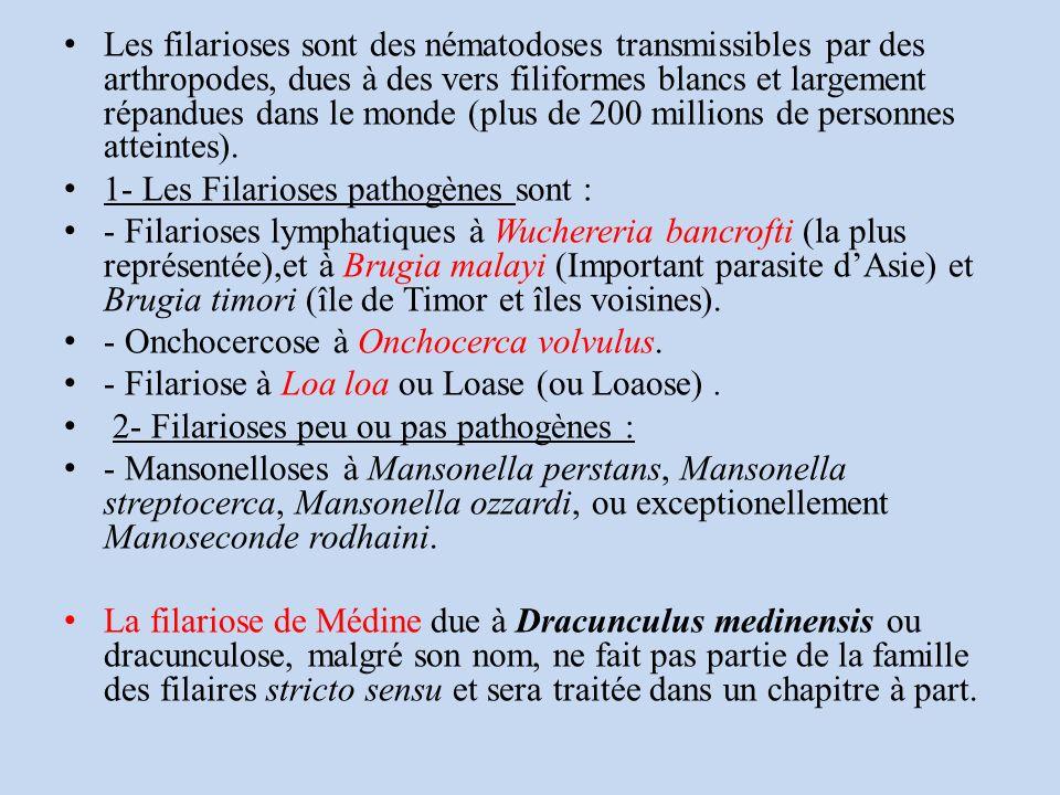 Les filarioses sont des nématodoses transmissibles par des arthropodes, dues à des vers filiformes blancs et largement répandues dans le monde (plus de 200 millions de personnes atteintes).