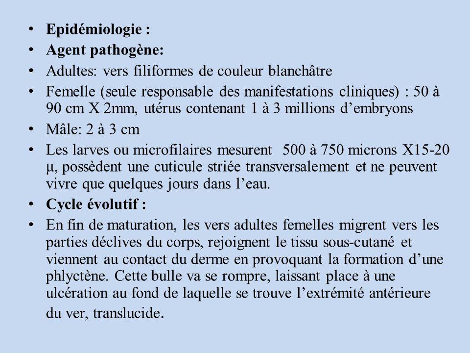 Epidémiologie : Agent pathogène: Adultes: vers filiformes de couleur blanchâtre