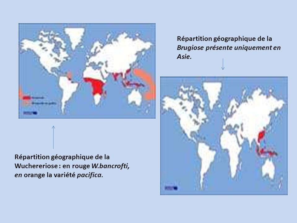Répartition géographique de la Brugiose présente uniquement en Asie.