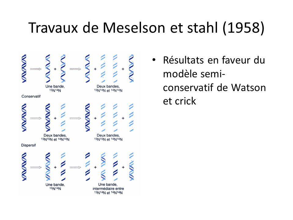 Travaux de Meselson et stahl (1958)