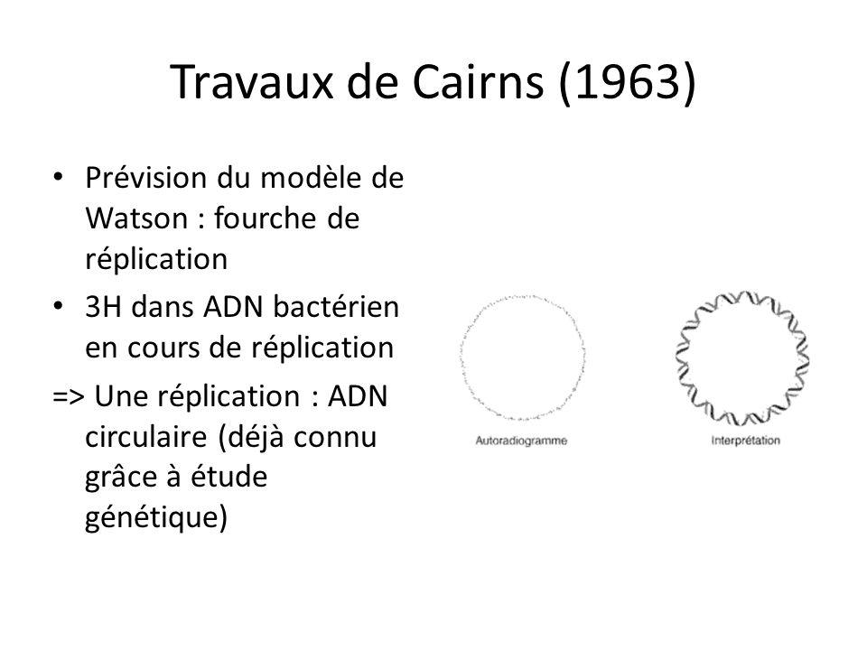 Travaux de Cairns (1963) Prévision du modèle de Watson : fourche de réplication. 3H dans ADN bactérien en cours de réplication.