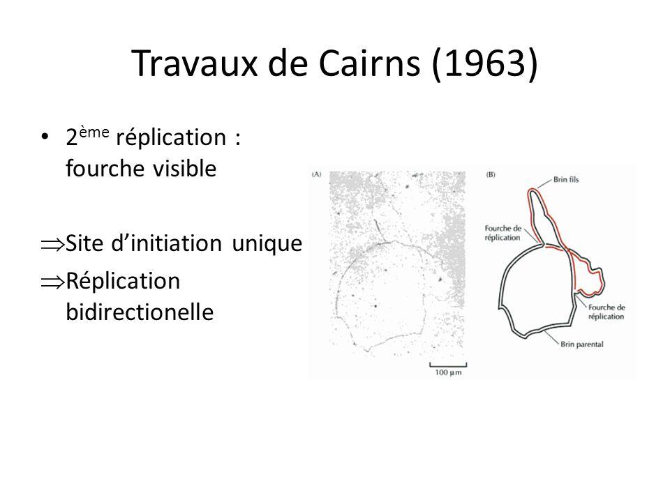 Travaux de Cairns (1963) 2ème réplication : fourche visible