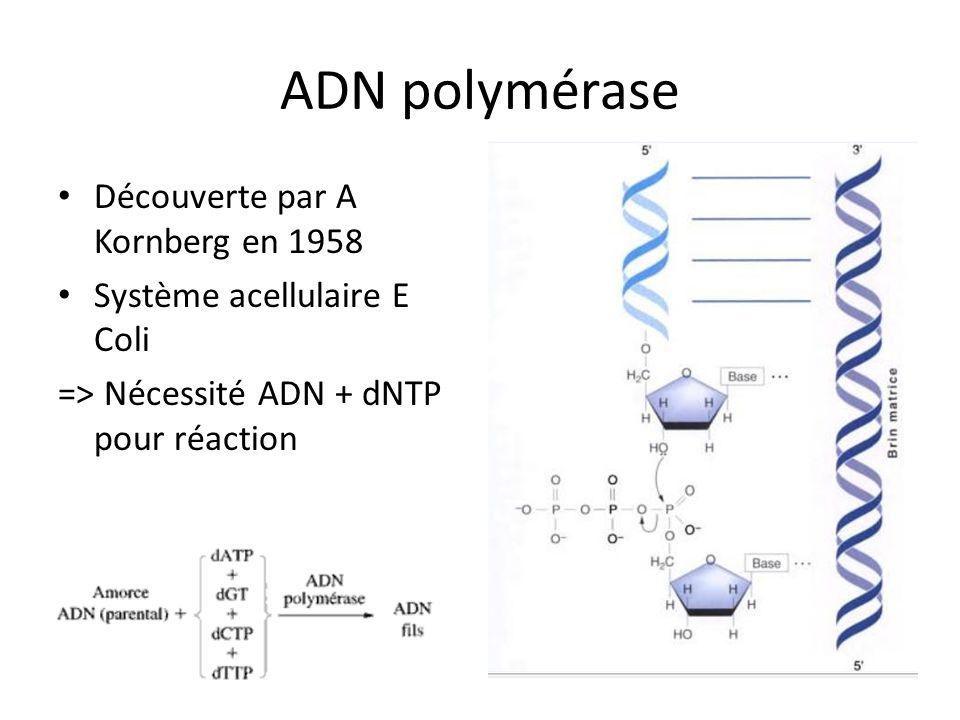 ADN polymérase Découverte par A Kornberg en 1958