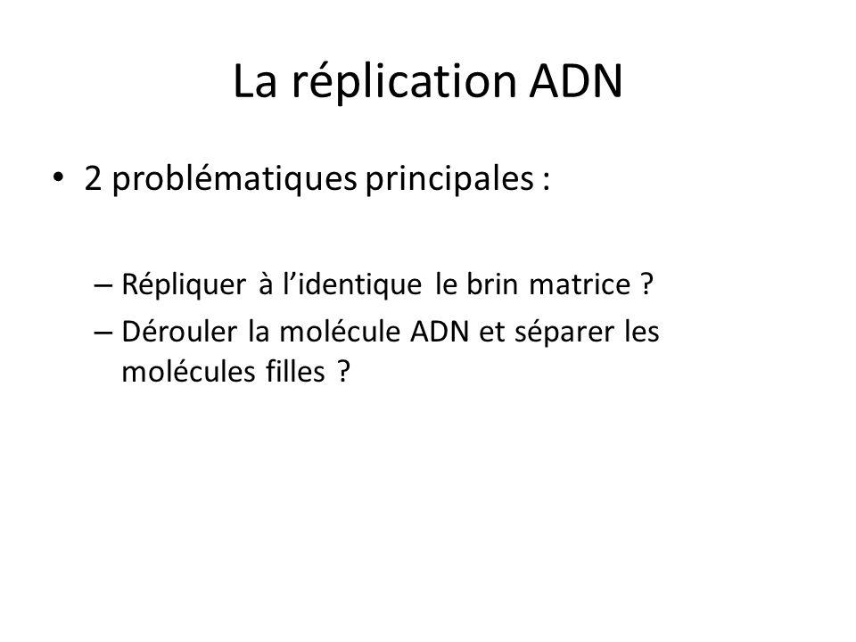 La réplication ADN 2 problématiques principales :