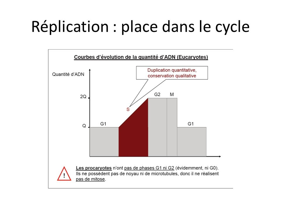 Réplication : place dans le cycle