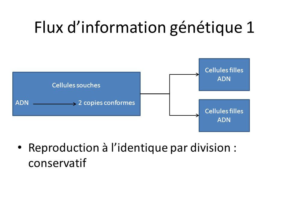 Flux d'information génétique 1