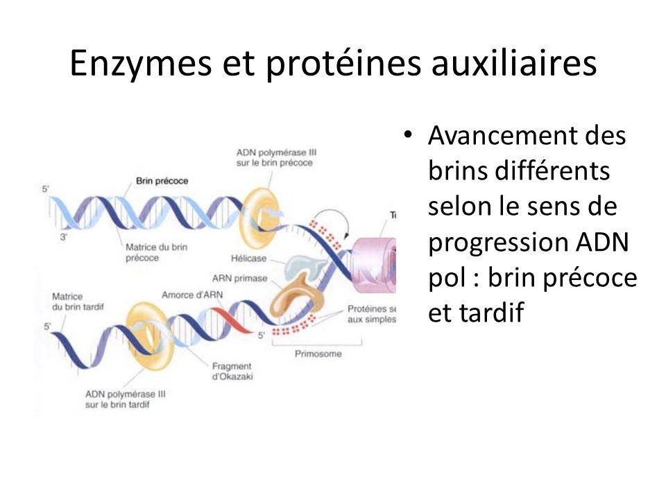 Enzymes et protéines auxiliaires