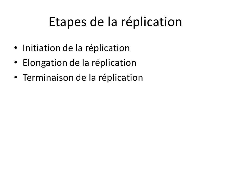 Etapes de la réplication