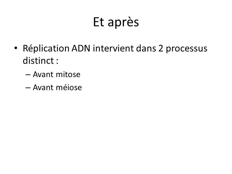 Et après Réplication ADN intervient dans 2 processus distinct :