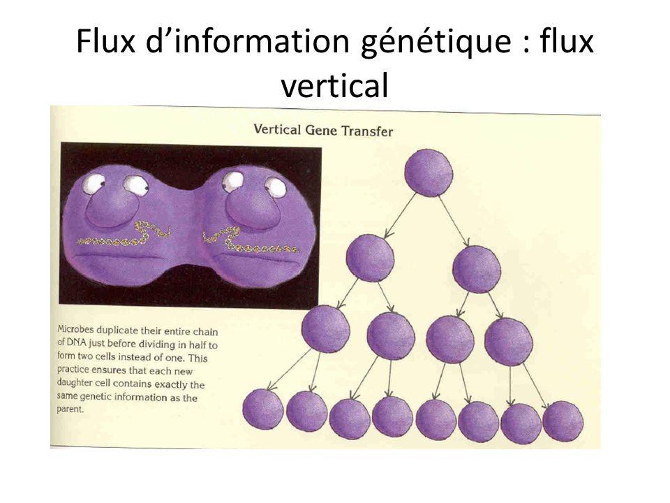Flux d'information génétique : flux vertical