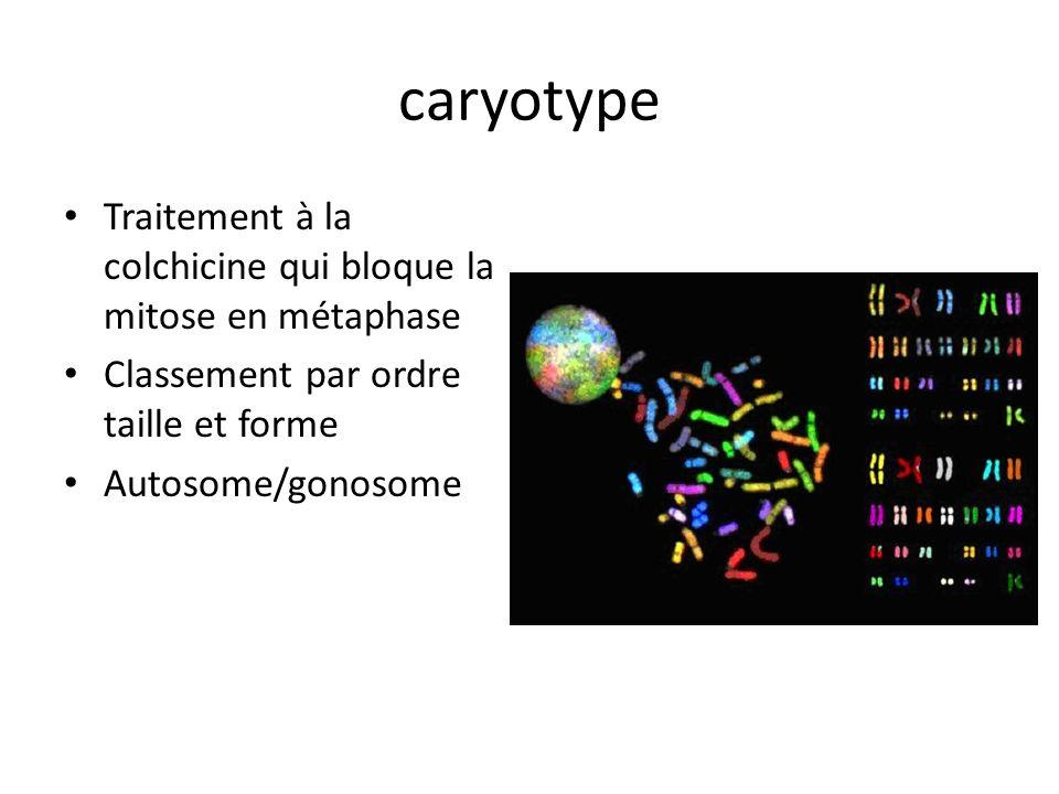 caryotype Traitement à la colchicine qui bloque la mitose en métaphase