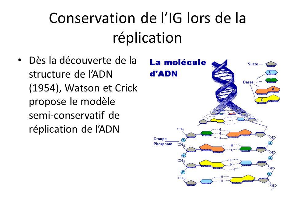 Conservation de l'IG lors de la réplication