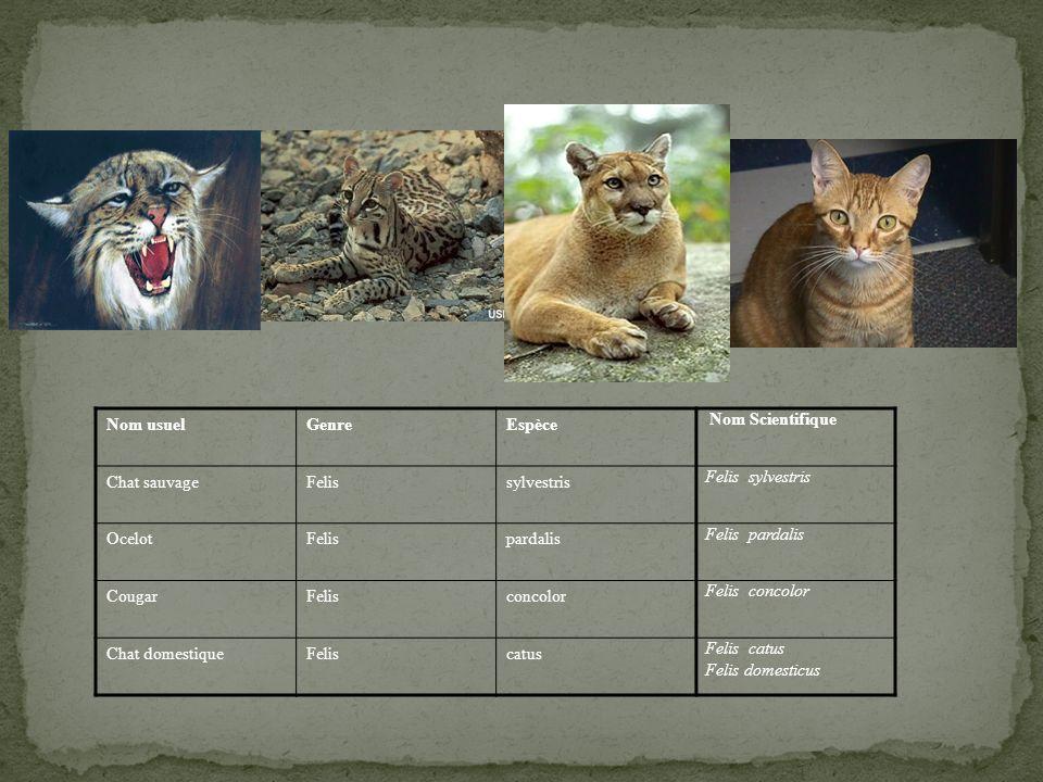 Nom usuel Genre. Espèce. Nom Scientifique. Chat sauvage. Felis. sylvestris. Felis sylvestris.