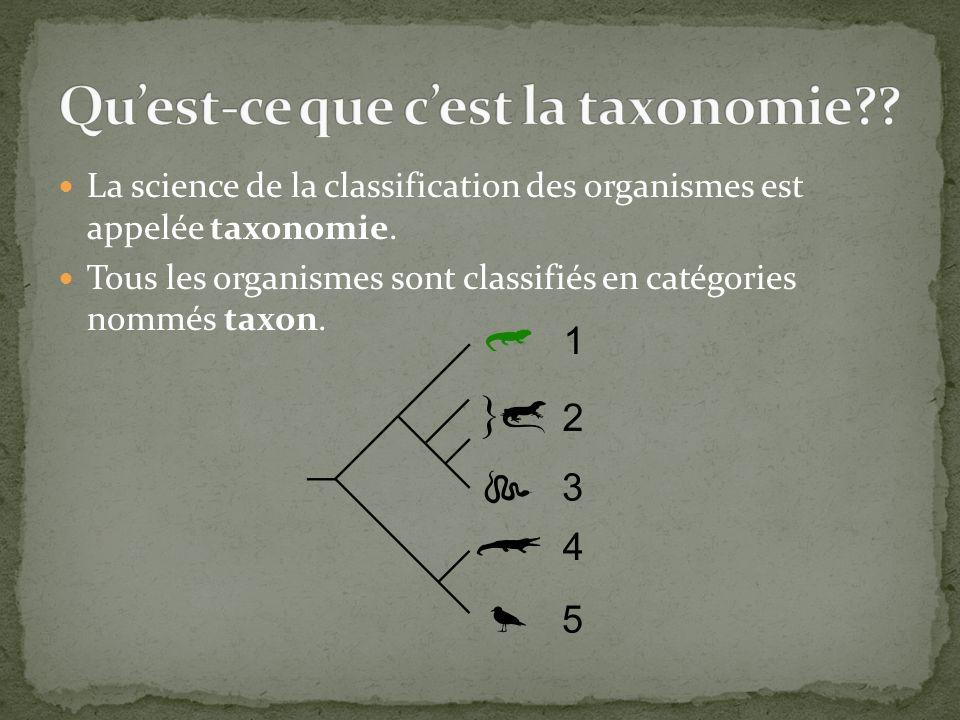 Qu'est-ce que c'est la taxonomie