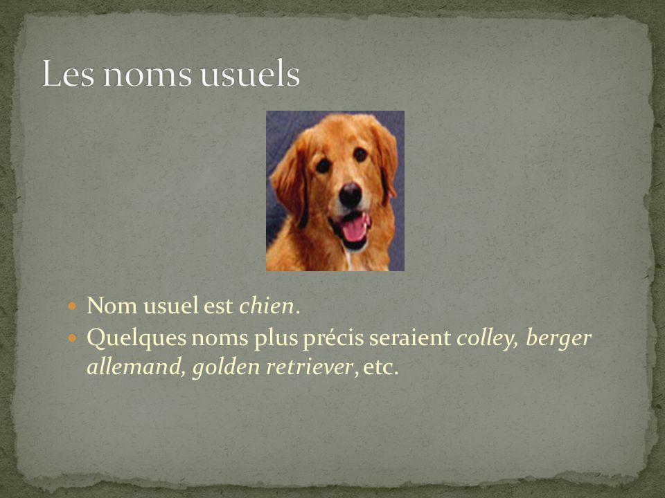 Les noms usuels Nom usuel est chien.