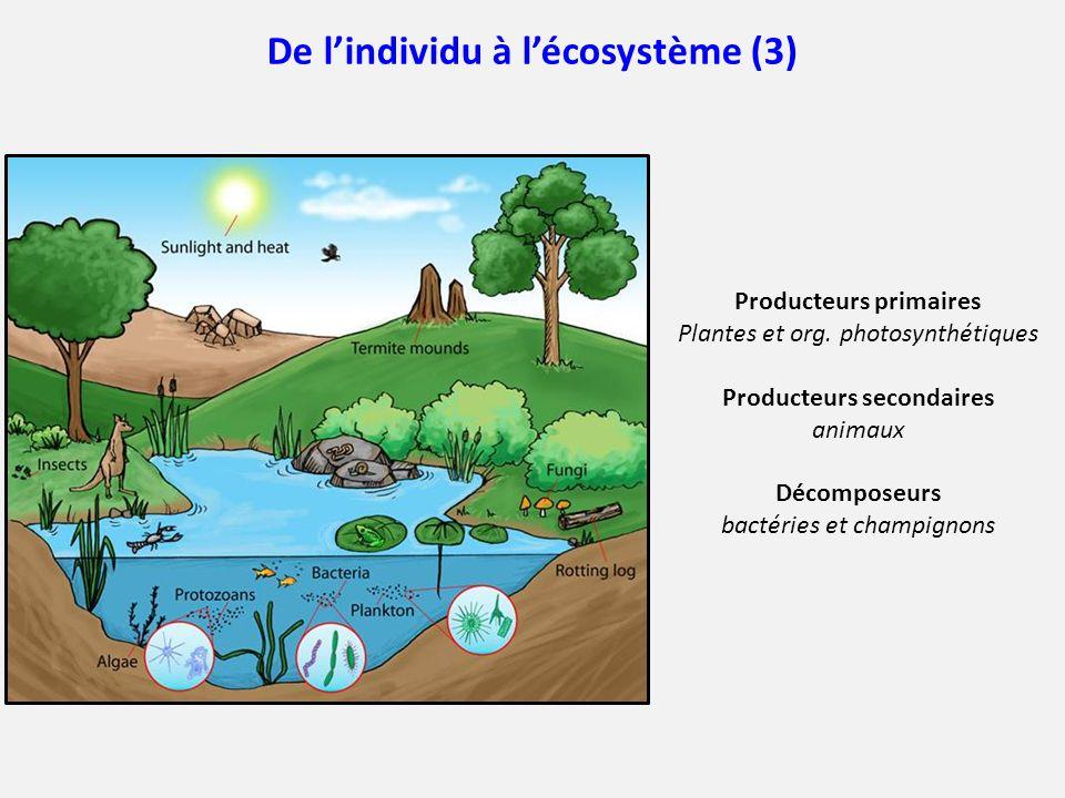 De l'individu à l'écosystème (3)