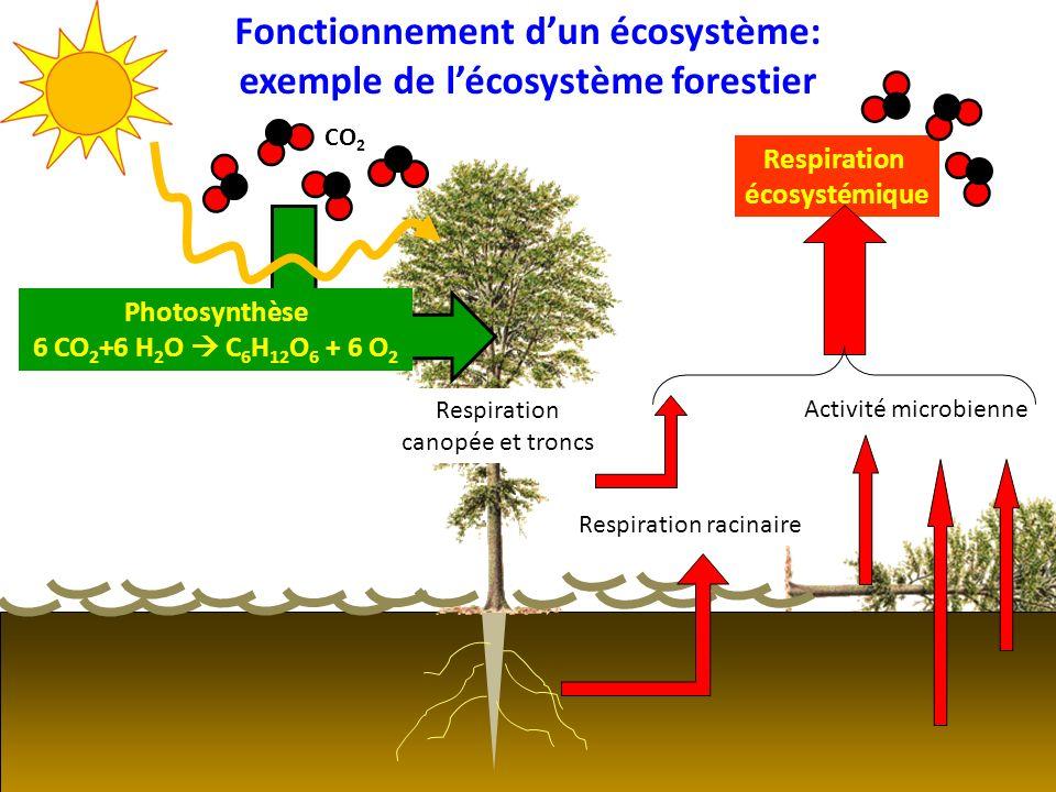 Fonctionnement d'un écosystème: exemple de l'écosystème forestier