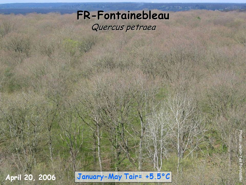 FR-Fontainebleau Quercus petraea January-May Tair= +5.5°C