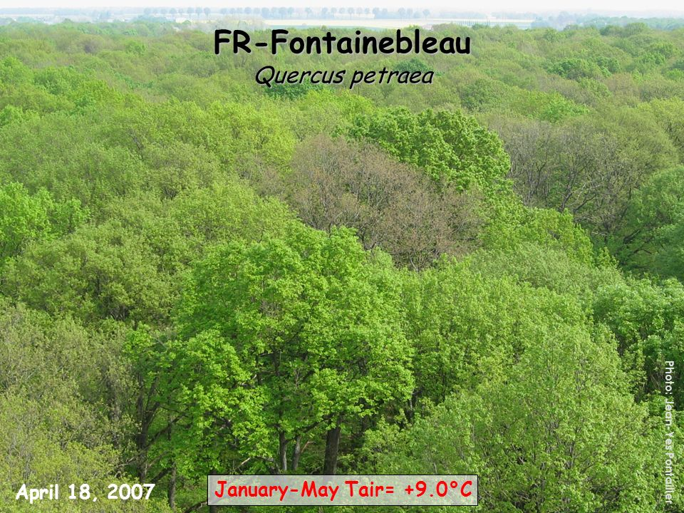 FR-Fontainebleau Quercus petraea January-May Tair= +9.0°C