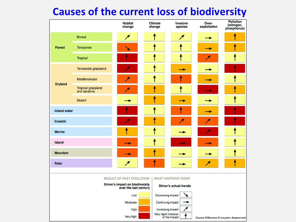 Causes of the current loss of biodiversity
