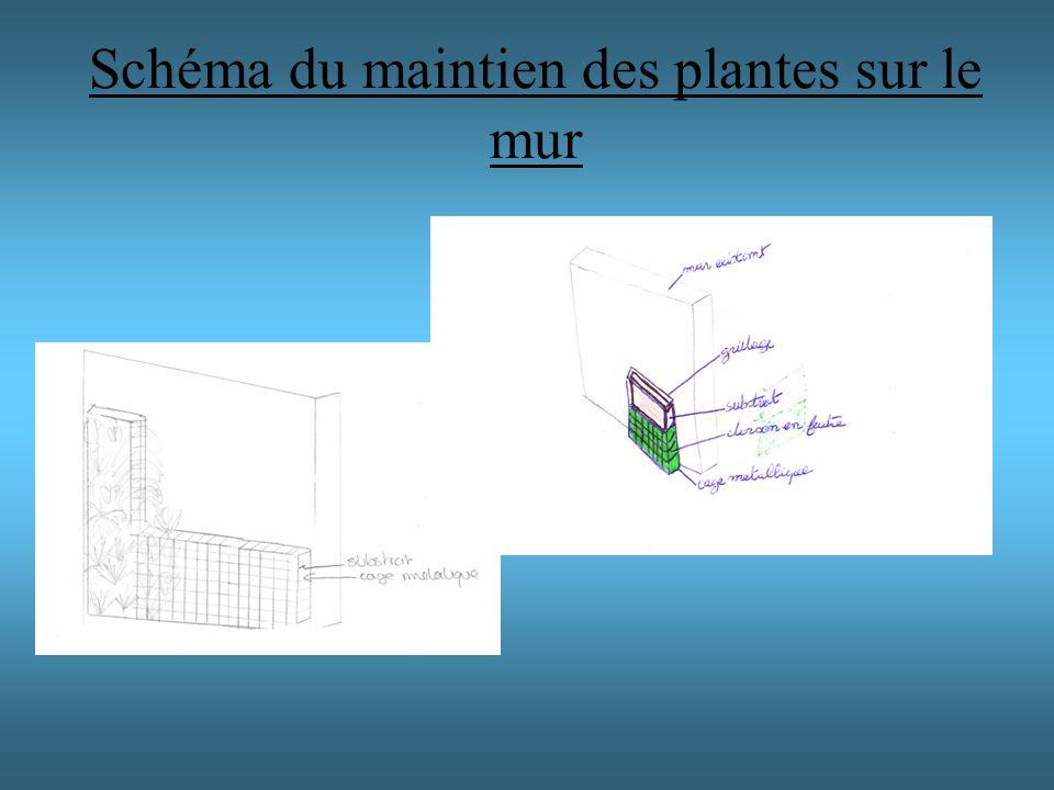 Schéma du maintien des plantes sur le mur