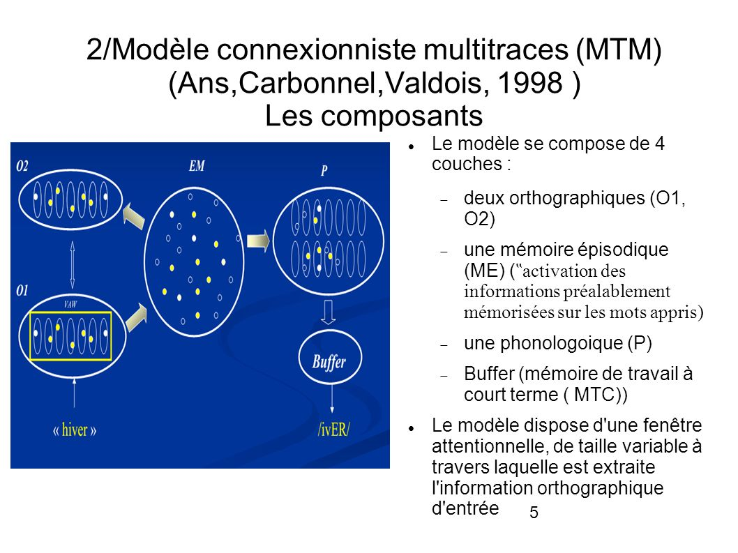 2/Modèle connexionniste multitraces (MTM) (Ans,Carbonnel,Valdois, 1998 ) Les composants