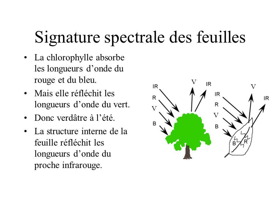 Signature spectrale des feuilles