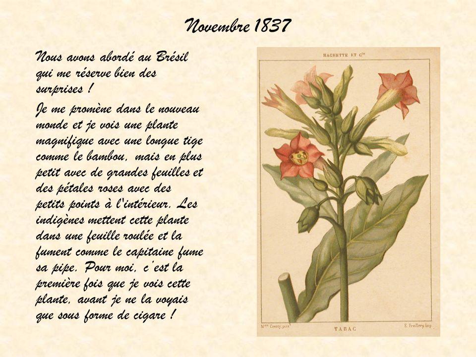 Novembre 1837 Nous avons abordé au Brésil qui me réserve bien des surprises !