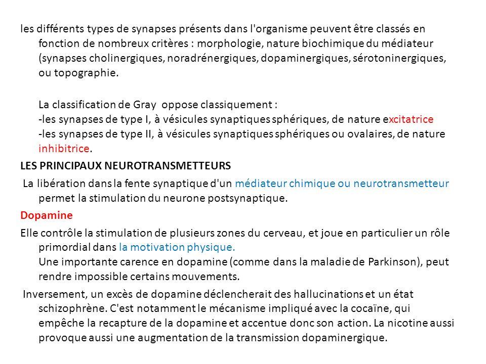 les différents types de synapses présents dans l organisme peuvent être classés en fonction de nombreux critères : morphologie, nature biochimique du médiateur (synapses cholinergiques, noradrénergiques, dopaminergiques, sérotoninergiques, ou topographie.