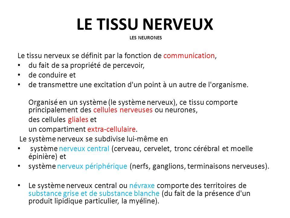 LE TISSU NERVEUX LES NEURONES