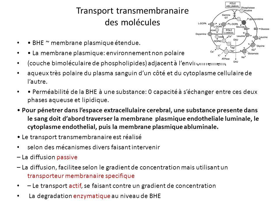 Transport transmembranaire des molécules