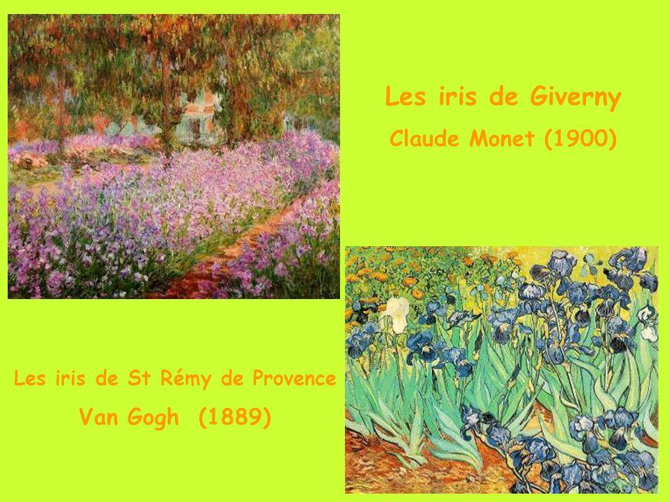 Les iris de St Rémy de Provence