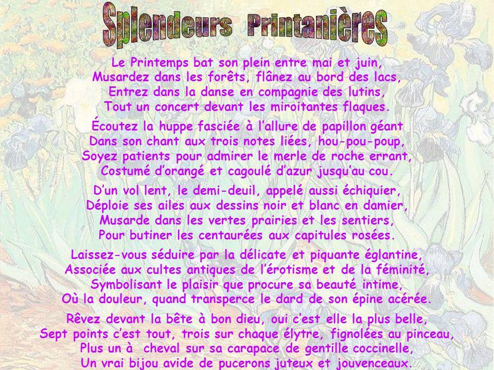 Splendeurs Printanières