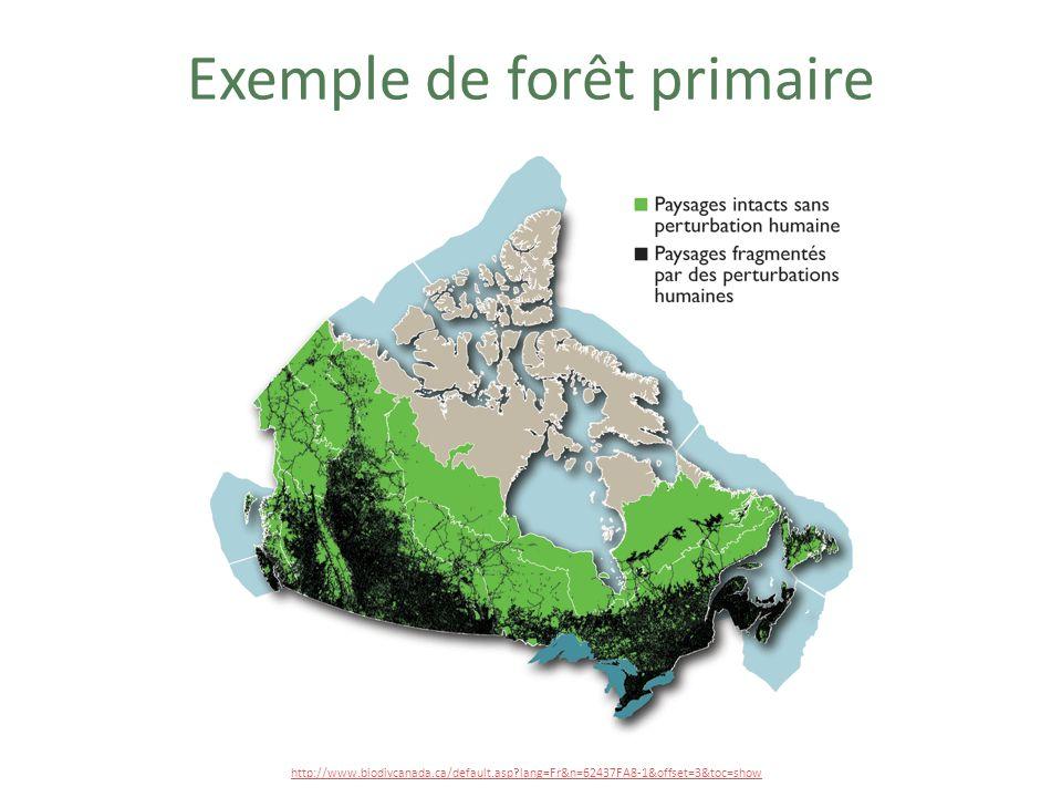 Exemple de forêt primaire
