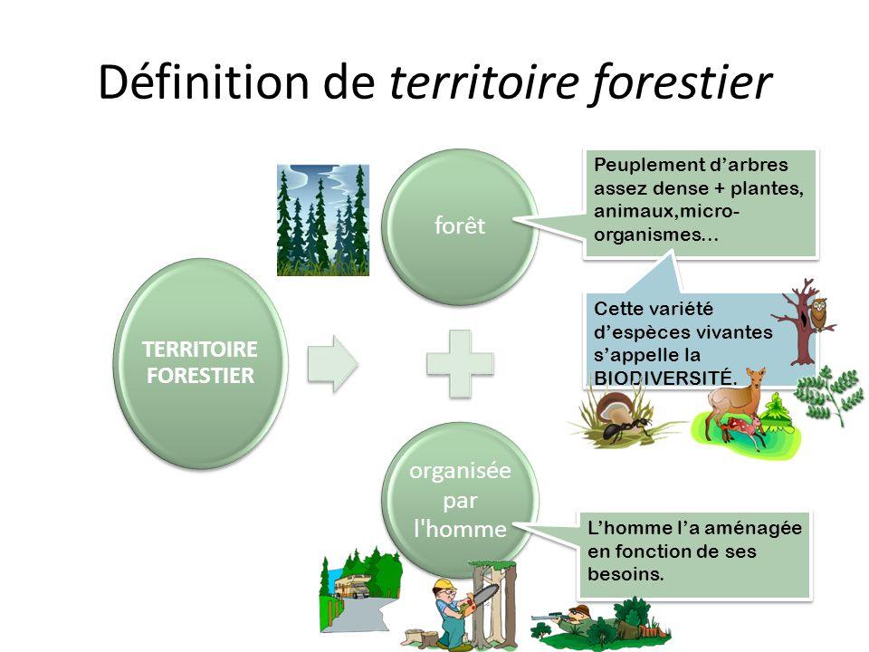 Définition de territoire forestier