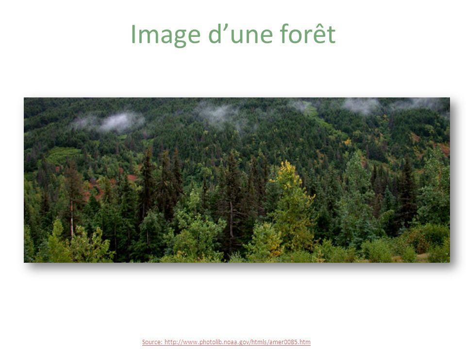 Image d'une forêt Source: http://www.photolib.noaa.gov/htmls/amer0085.htm