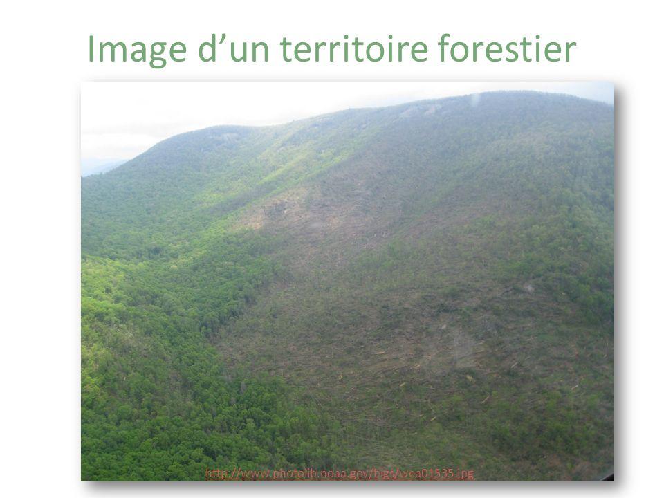 Image d'un territoire forestier