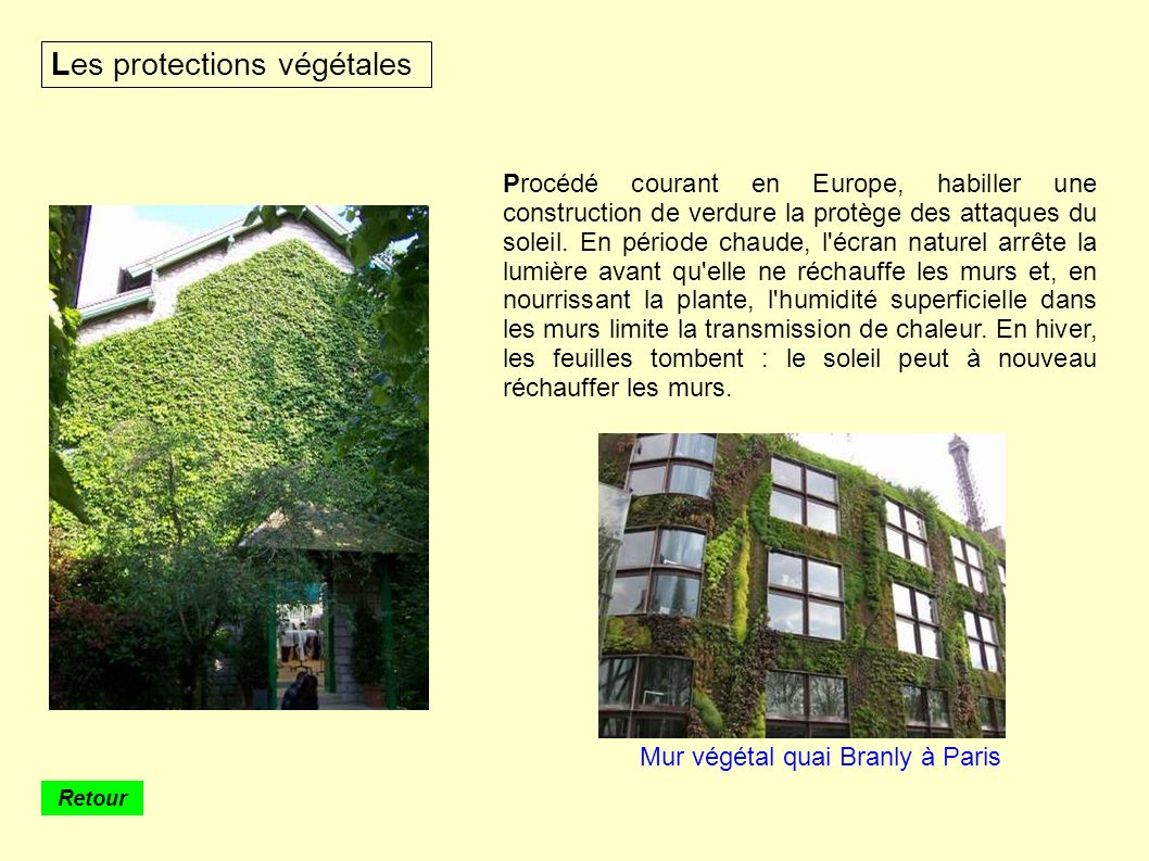 Mur végétal quai Branly à Paris