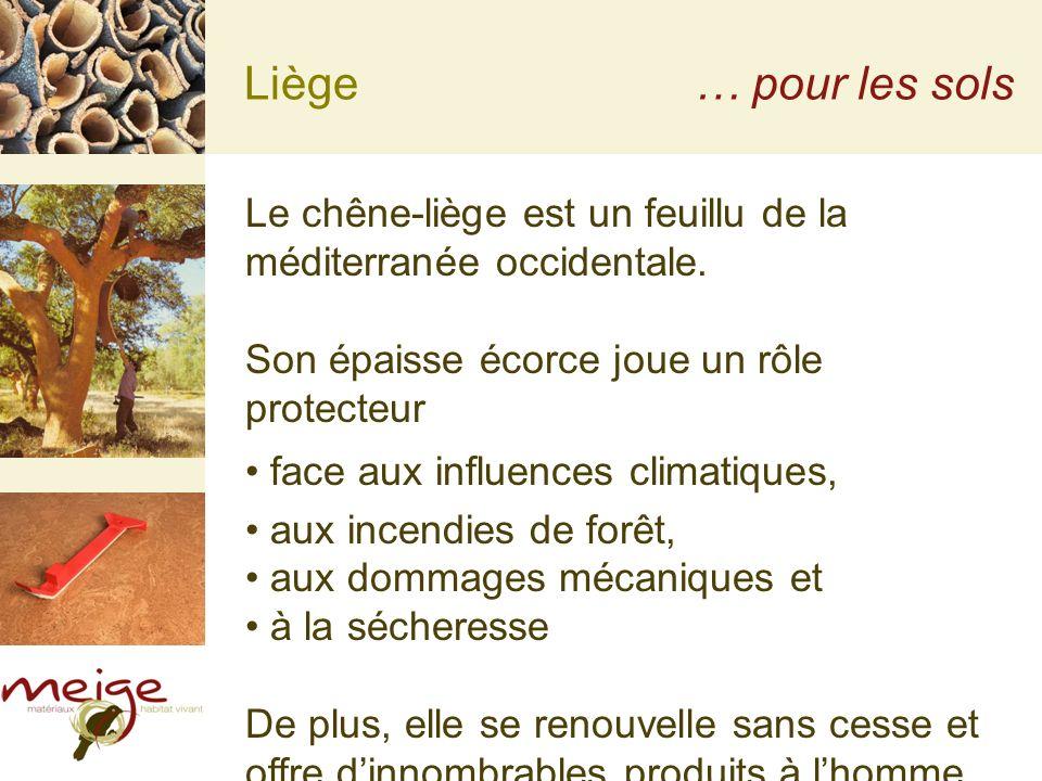 Liège … pour les sols. Le chêne-liège est un feuillu de la méditerranée occidentale. Son épaisse écorce joue un rôle protecteur.