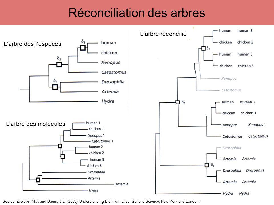 Réconciliation des arbres