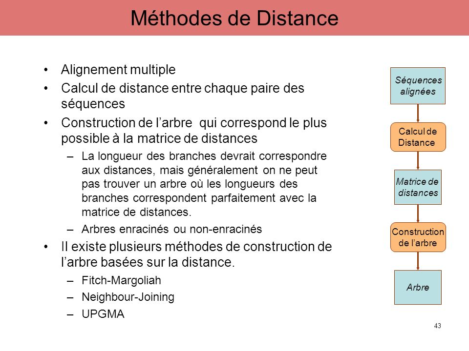 Méthodes de Distance Alignement multiple