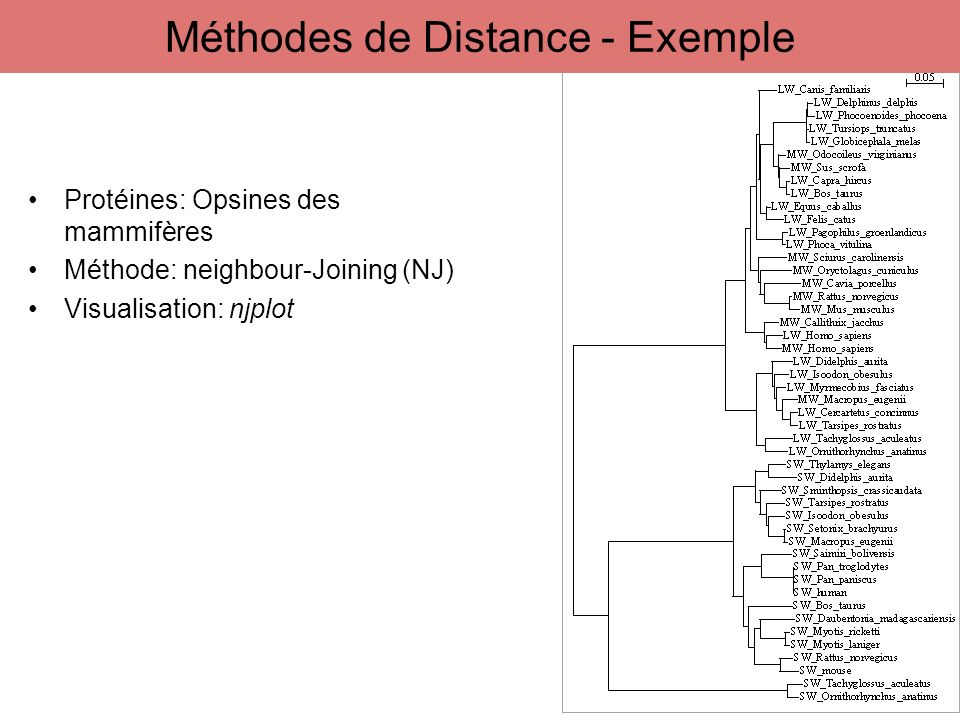 Méthodes de Distance - Exemple