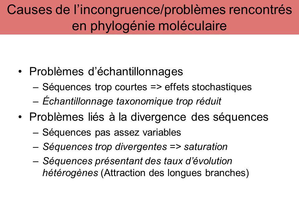 Causes de l'incongruence/problèmes rencontrés en phylogénie moléculaire