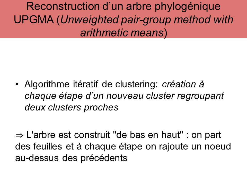 Reconstruction d'un arbre phylogénique UPGMA (Unweighted pair-group method with arithmetic means)