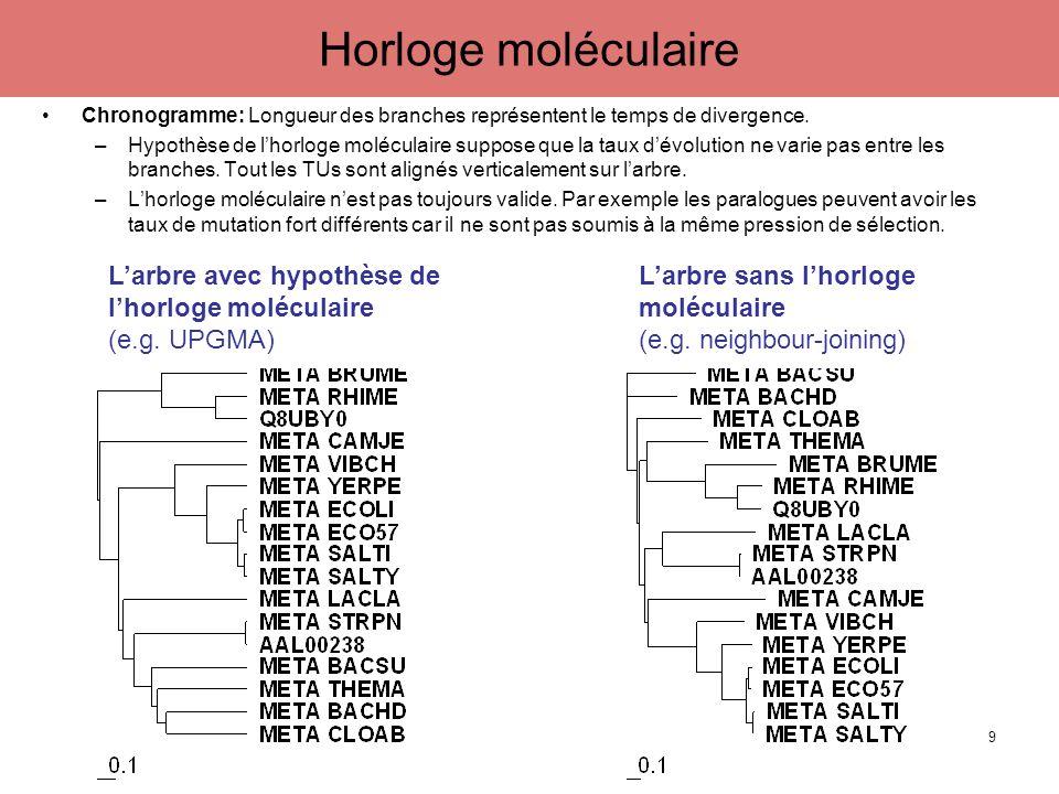 Horloge moléculaire L'arbre avec hypothèse de l'horloge moléculaire
