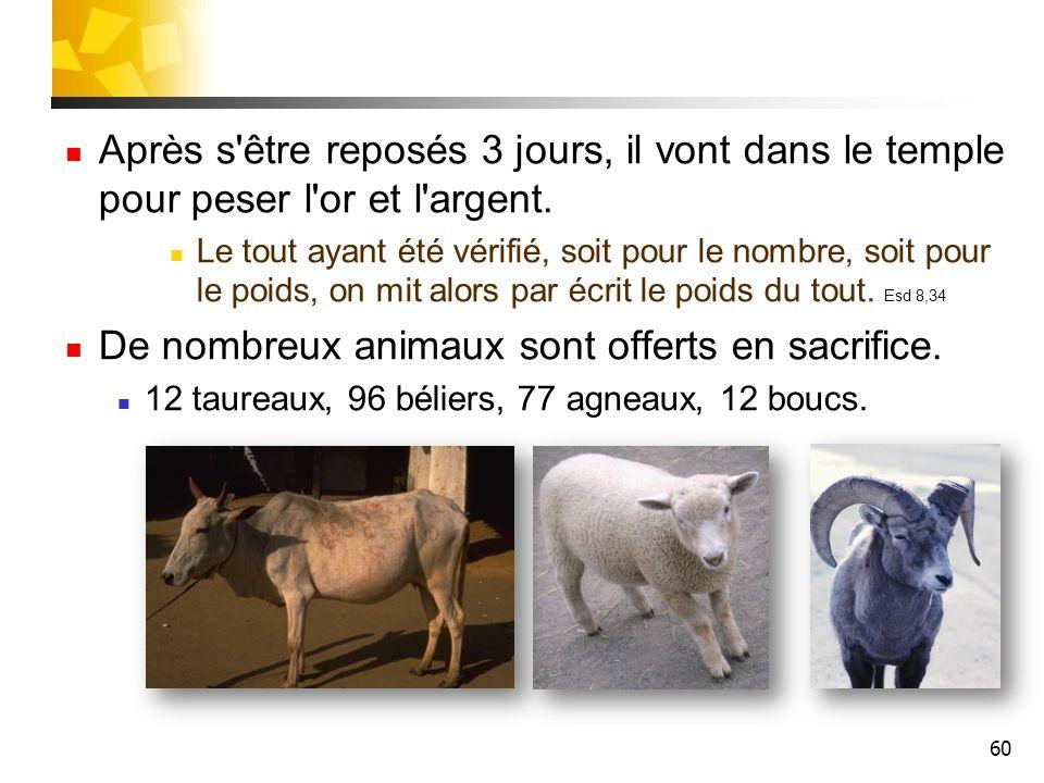 De nombreux animaux sont offerts en sacrifice.