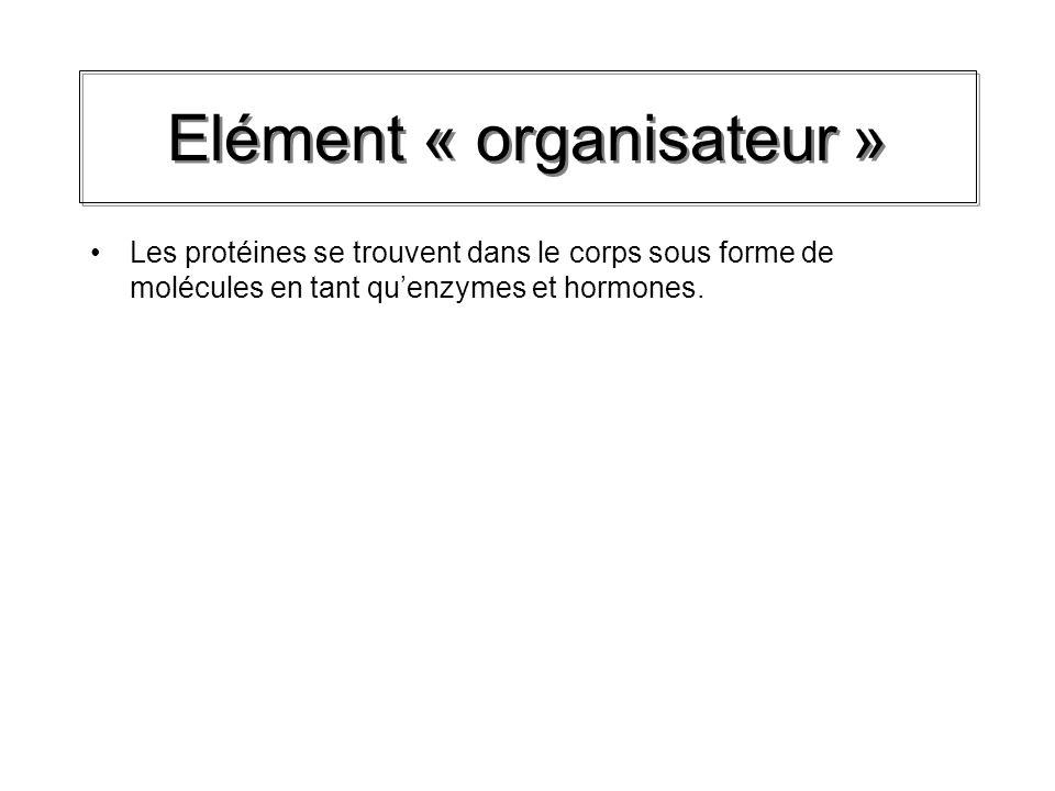 Elément « organisateur »